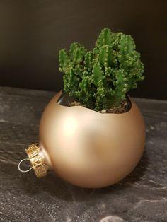 Broken Christmas Ball! Throw away? No, I use it as a flowerpot. Great as a Christmas styling.#kerstbal #christmasball #kerststyling #kerstversiering #christmasdecoration #chrismasinspiration #stylenmetplanten #plant #plantstagram #diy #creative #othmardecorations