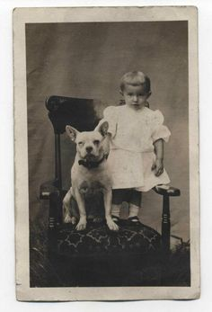 FRENCH BULLDOG~CIRCA 1905