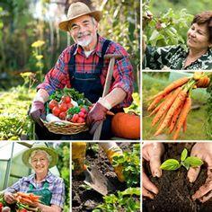 Gemüsegarten Gartenplan: was wann tu tun ist