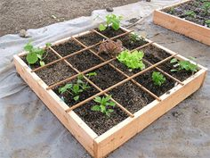 Square foot gardening - how to plant your square foot garden bed