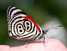 How to Raise a Caterpillar Into a Butterfly or Moth