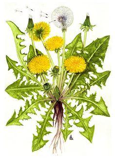 Usos en el huerto de preparados con plantas medicinales | ECOagricultor