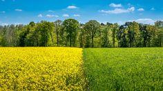 Frühlingsfarben -