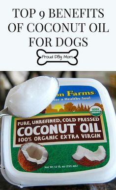 Top 9 Benefits of Coconut Oil For Dogs | Dog Health Tips | Holistic Health and Wellness Tips |