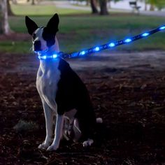This lighted dog collar is perfect for walking at night.