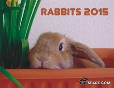 Bunspace.com Rabbit Calendar 2015