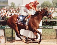 Real Quiet won the 1998 Kentucky Derby and Preakness Stakes but finished in the Belmont Stakes to Victory Gallop by a nose. Saratoga Horse Racing, The Belmont Stakes, Derby Horse, Preakness Stakes, Faster Horses, American Pharoah, Derby Winners, Sport Of Kings, Thoroughbred Horse