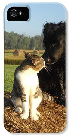 A Farm Cat and Black dog greet each other while sitting on a round hay bale that's out in the field on the morning of 8 September 2011 in a photo taken by Kent Lorentzen.
