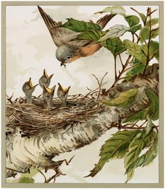 Vintage Robin with Babies Image!