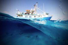 Magnifique : 12 photographies du monde sous-marin à couper le soufle
