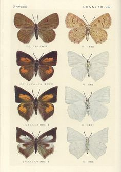 All sizes | papillon 49 butterflies - lots! Photo Wall Collage, Collage Art, Poster Wall, Poster Prints, Posters Vintage, Vintage Botanical Prints, Cute Wallpaper Backgrounds, Aesthetic Collage, Nature Prints