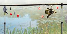 How to catch carp in snaggy waters