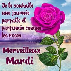 Mardi image #7635 - Je te souhaite une journée parfaite en parfumée comme les roses. Mervelleux Mardi - Partager cette photo sur Facebook, Twitter et WhatsApp. Good Day Quotes, Funny Mom Quotes, Good Morning Quotes, Mom Humor, Girl Humor, Funny Good Morning Messages, Bon Mardi, Mom Quotes From Daughter, Happy Friendship Day