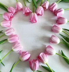 Tulips arranged in the shape of a heart.