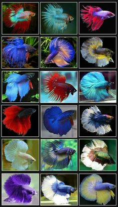 Pretty fishes