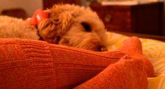. Mans Best Friend, Best Friends, Dogs, Animals, Beat Friends, Animales, Animaux, Pet Dogs, Doggies