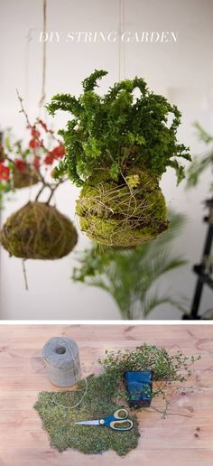 This tutorial shows you a simple and effective way to create hanging garden inspired by the beautiful Kokedama, a Japanese hanging planter. In this tutoria