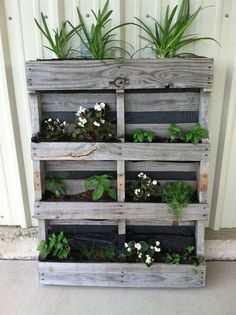Begonias, jalapeños, basil, chives & cilantro. Love my pallet garden!