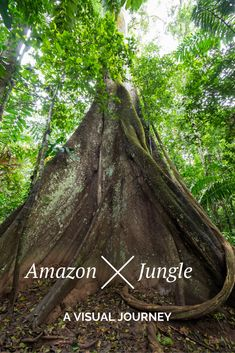 The Amazon Jungle in Peru is truly magical.   Drop what you're doing and escape for the next couple of minutes to the depths of the Amazon and what it's like to spend 4 days at the Refugio Amazonas.  Trust me it'll be worth your time :D