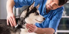 How to find a perfect doctor for your pet?