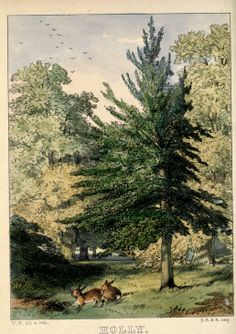 Voices from the woodlands, descriptive of forest trees, ferns, mosses, and lichens. - Biodiversity Heritage Library