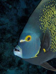 ♥♥♥ Beautiful-looking Fish ♥♥♥