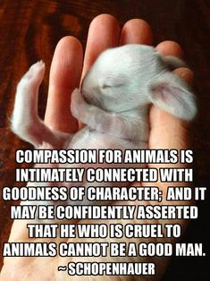 Compassion for animals is intimately connected with goodness of character.
