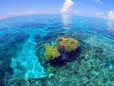 下地島は珊瑚が隆起してできた島。浅瀬のリーフでは水面からでもカラフルな珊瑚礁が見られるほど透明な海。干潮時には水面から顔を出しそうな珊瑚が見られます。 by Karin