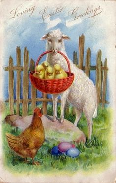 In this Raphael Tuck and Sons postcard a ewe is proudly showing off some very large chicks while the hen, with coloured eggs at her feet, looks on. I love that fence in the background.