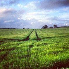 A field in Devon