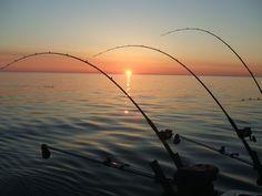 fishing - Google 検索