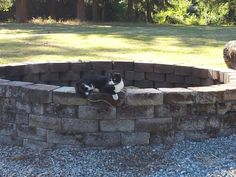 Bow Bow on the edge of fire pit