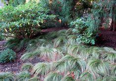 Lawn Alternative Update from the Scott Arboretum