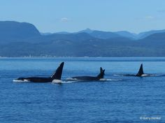 bPod by Aboriginal Journeys - Whale Watching & Grizzly Bear Tours