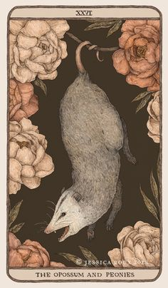 """jessicaroux: """"The Opossum and Peonies, another card for Woodland Wardens, my in-progress oracle deck project. They're one of my favorite creepy-cute animals, so I loved getting to work on this one! Illustrations, Illustration Art, Peony Print, Opossum, Art Moderne, Back To Nature, Walking In Nature, Art Plastique, Framed Art Prints"""