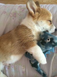 16 Dogs Who Are Best Friends With Their Stuffed Animals corgi Cute Corgi, Corgi Dog, Dog Cat, Baby Corgi, Dachshund, Cute Funny Animals, Cute Baby Animals, Animals And Pets, Fluffy Animals