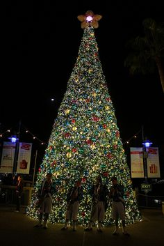 SeaWorld Orlando's Christmas Celebration is amazing and it offers music-filled nights with live performances around every corner and of course a Christmas Lights Etc Giant Everest Christmas Tree!