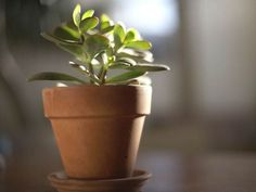 Don't let anyone fool you—growing indoor plants is easy and just as fun as having an outdoor garden. In fact, indoor plants not only help...