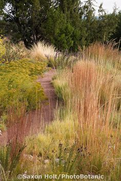 A Mix of Grasses - naturalized path