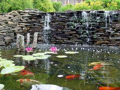 Koi pond waterfall wall