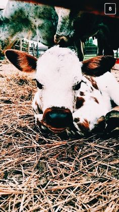 most beautiful baby cow! Cute Creatures, Beautiful Creatures, Animals Beautiful, Vida Animal, My Animal, Farm Animals, Animals And Pets, Wild Animals, Baby Cows