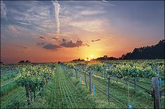 Arkansas Wine Country