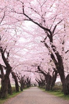 Trendy Ideas For Beautiful Tree Photography Spring Pink Blossom Beautiful Places In The World, Places Around The World, Around The Worlds, Amazing Places, Beautiful Things, Beautiful Beautiful, Beautiful Places To Visit, Tree Photography, Spring Photography