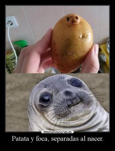 It& just so nice - l - Funny Memes Animals - . - This is just so beautiful – l – Funny Memes Animals – - Funny Animal Jokes, Funny Animal Pictures, Cute Funny Animals, Cute Baby Animals, Funny Cute, Funny Images, Odd Pictures, Animal Humor, Wild Animals