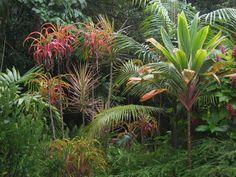 plants for subtropical garden - Google Search