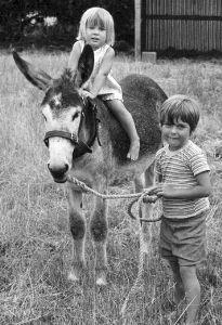 Courtesy: The Donkey & Mule Society of New Zealand (Inc.). Winton (New Zealand).