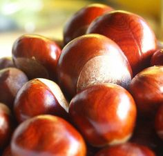 Conkers. I do not know why these were so popular but we all had at least 4 or 5.