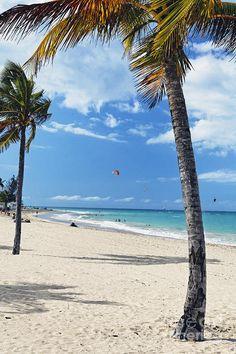 ✮ Palm Trees on Ocean Park Beach, San Juan, Puerto Rico