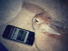 Official Daily Bunny iPhone app announced! - April 23, 2012