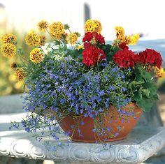 Container Gardening Idea 12